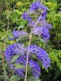 Πορφυρό λουλούδι στεφανιών Στοκ φωτογραφία με δικαίωμα ελεύθερης χρήσης