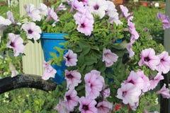 Πορφυρό λουλούδι στον κήπο Ντουμπάι θαύματος Στοκ Φωτογραφία