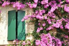 Πορφυρό λουλούδι στον τοίχο Στοκ Εικόνα