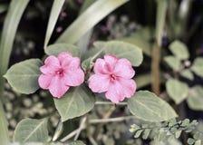 Πορφυρό λουλούδι στο δέντρο Στοκ εικόνες με δικαίωμα ελεύθερης χρήσης