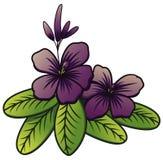 Πορφυρό λουλούδι της Jasmine Στοκ φωτογραφία με δικαίωμα ελεύθερης χρήσης