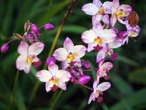 Πορφυρό λουλούδι Στοκ Εικόνες