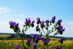 Πορφυρό λουλούδι Στοκ εικόνες με δικαίωμα ελεύθερης χρήσης