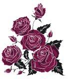 Πορφυρό σκίτσο δερματοστιξιών ανθοδεσμών τριαντάφυλλων floral τριγωνική σύνθεση Στοκ Εικόνες