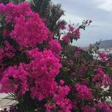 Πορφυρό σπίτι λουλουδιών Στοκ φωτογραφίες με δικαίωμα ελεύθερης χρήσης