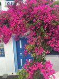 Πορφυρό σπίτι λουλουδιών Στοκ φωτογραφία με δικαίωμα ελεύθερης χρήσης