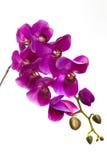 Πορφυρό τεχνητό λουλούδι ορχιδεών Στοκ εικόνα με δικαίωμα ελεύθερης χρήσης