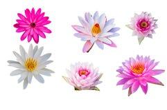 Πορφυρό Lotus στο απομονωμένο άσπρο υπόβαθρο Με το ψαλίδισμα του μονοπατιού στοκ φωτογραφία με δικαίωμα ελεύθερης χρήσης