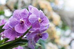 Πορφυρό Orchid λουλούδι Στοκ φωτογραφία με δικαίωμα ελεύθερης χρήσης