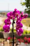 Πορφυρό Orchid λουλούδι Στοκ φωτογραφίες με δικαίωμα ελεύθερης χρήσης