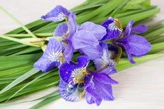 πορφύρα ίριδων λουλουδ&io Στοκ εικόνες με δικαίωμα ελεύθερης χρήσης