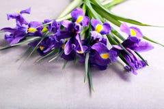 πορφύρα ίριδων λουλουδ&io Στοκ φωτογραφία με δικαίωμα ελεύθερης χρήσης