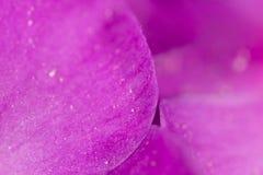 πορφύρα λουλουδιών μακρο καλοκαίρι λουλουδιών του 2009 έξοχο Στοκ Εικόνες