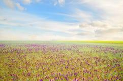 πορφύρα λουλουδιών Στοκ εικόνα με δικαίωμα ελεύθερης χρήσης