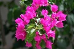 πορφύρα λουλουδιών Στοκ εικόνες με δικαίωμα ελεύθερης χρήσης