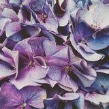 πορφύρα λουλουδιών Στοκ φωτογραφία με δικαίωμα ελεύθερης χρήσης