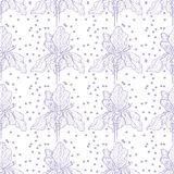 Πορφύρα σχεδίων της Iris λουλουδιών ήπια με τα σημεία ελεύθερη απεικόνιση δικαιώματος