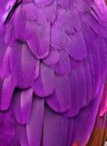 πορφύρα φτερών Στοκ φωτογραφίες με δικαίωμα ελεύθερης χρήσης