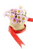 Πορφύρα χρώματος λουλουδιών Mum Στοκ εικόνα με δικαίωμα ελεύθερης χρήσης