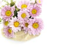Πορφύρα χρώματος λουλουδιών Mum Στοκ Εικόνες