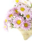 Πορφύρα χρώματος λουλουδιών Mum Στοκ φωτογραφία με δικαίωμα ελεύθερης χρήσης