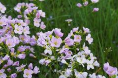 πορφύρα χλόης λουλουδι στοκ φωτογραφίες με δικαίωμα ελεύθερης χρήσης