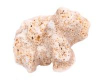 Πορώδης μπεζ πέτρα από Kauai την παραλία στη Χαβάη Στοκ φωτογραφίες με δικαίωμα ελεύθερης χρήσης