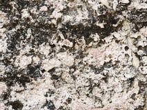 Πορώδης ψαμμίτης Στοκ φωτογραφία με δικαίωμα ελεύθερης χρήσης