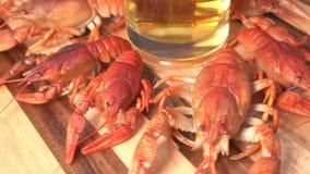 Ποτήρι της μπύρας και βρασμένο crawfishes απόθεμα βίντεο