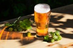Ποτήρι της μπύρας με τους λυκίσκους στον ξύλινο ήλιο, κήπος, οδός, εύγευστος, όμορφος, ελαφρύς χρυσός Στοκ Φωτογραφίες