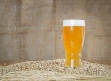 Ποτήρι της μπύρας στα σιτάρια βύνης στοκ φωτογραφίες