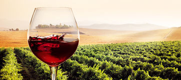 Ποτήρι του κόκκινου κρασιού στο ηλιόλουστο τοπίο αμπελώνων Στοκ Φωτογραφία
