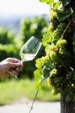 Ποτήρι του άσπρου κρασιού (Riesling) Στοκ εικόνα με δικαίωμα ελεύθερης χρήσης