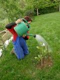 ποτίζοντας γυναίκα magnolia μετ& στοκ φωτογραφία με δικαίωμα ελεύθερης χρήσης