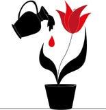 Ποτίζοντας λουλούδι Στοκ εικόνες με δικαίωμα ελεύθερης χρήσης