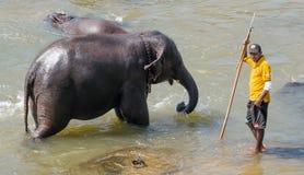 Ποταμός έλξης ελεφάντων Στοκ εικόνες με δικαίωμα ελεύθερης χρήσης