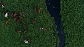 ποταμός αγελάδων φιλμ μικρού μήκους