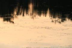 Ποταμός αντανάκλασης και δέντρο σκιών στο όμορφο ηλιοβασίλεμα νερού Στοκ Φωτογραφία