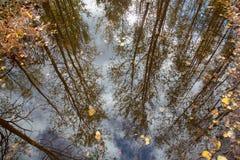 Ποταμός αντανάκλασης δέντρων Στοκ εικόνα με δικαίωμα ελεύθερης χρήσης