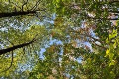 Ποταμός αντανάκλασης δέντρων Στοκ Εικόνες
