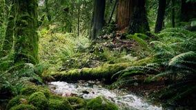 Ποταμός βαθιά στα ξύλα απόθεμα βίντεο