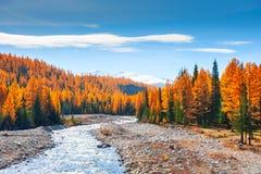 Ποταμός βουνών και δάσος φθινοπώρου σε Altai, Σιβηρία, Ρωσία στοκ εικόνες με δικαίωμα ελεύθερης χρήσης