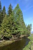 Ποταμός βουνών κοντά στο χωριό Aktash στην περιοχή Ulagan της Δημοκρατίας Altai Δυτική Σιβηρία Ρωσία στοκ φωτογραφίες