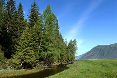 Ποταμός βουνών κοντά στο χωριό Aktash στην περιοχή Ulagan της Δημοκρατίας Altai Δυτική Σιβηρία Ρωσία στοκ φωτογραφία με δικαίωμα ελεύθερης χρήσης