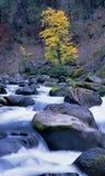 ποταμός βουνών λίθων Στοκ Εικόνα