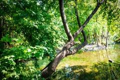 Ποταμός βουνών που διατρέχει του πράσινου από την Ανατολία Liquidambar sweetgum δάσους orientalis Στοκ εικόνα με δικαίωμα ελεύθερης χρήσης