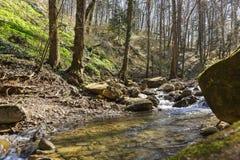 Ποταμός βουνών που ρέει στα δυσνόητα δάση των βουνών Καύκασου Στοκ εικόνα με δικαίωμα ελεύθερης χρήσης