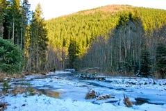 Ποταμός βουνών σε ένα χειμερινό δάσος Στοκ Εικόνα