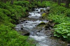 Ποταμός βουνών σε Karpaty, Ουκρανία Στοκ φωτογραφία με δικαίωμα ελεύθερης χρήσης