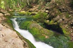 Ποταμός βουνών στην έκταση δασών και βουνών. Στοκ Εικόνα